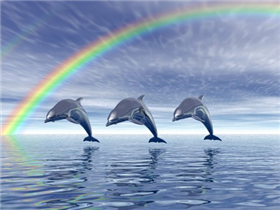 Dolphin Fusion Web Design